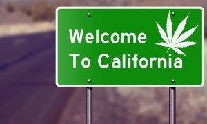 California Cannabis Legalization - Cannabis Magazine