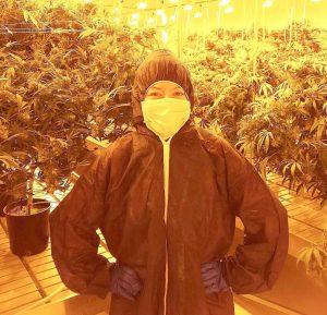 indoor cannabis grow room