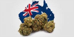 Australia cannabis - Erik Peterson TerpX