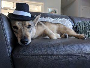 Caitlin Pyle dog