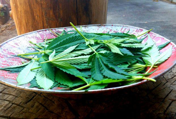 Cannabis Leaf Pesto