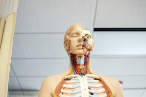 Medical School Psychiatry Dr. Roitman