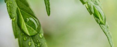 Cannabis Science PathogenDx