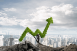 CBD Market Growth