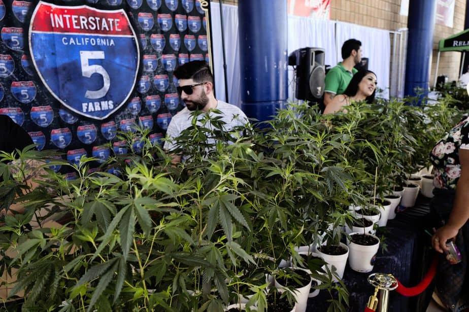 California Cannabis Taxes