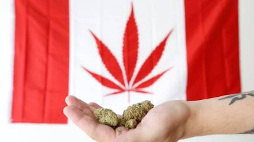 Cannabis Price War Canada
