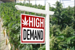 Cannabis Real Estate Market