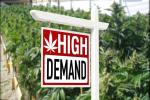 Cannabis Real Estate Market