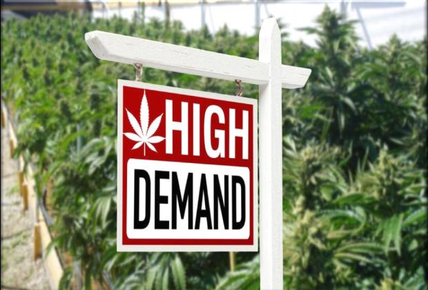 Cannabis Real Estate Market Canada