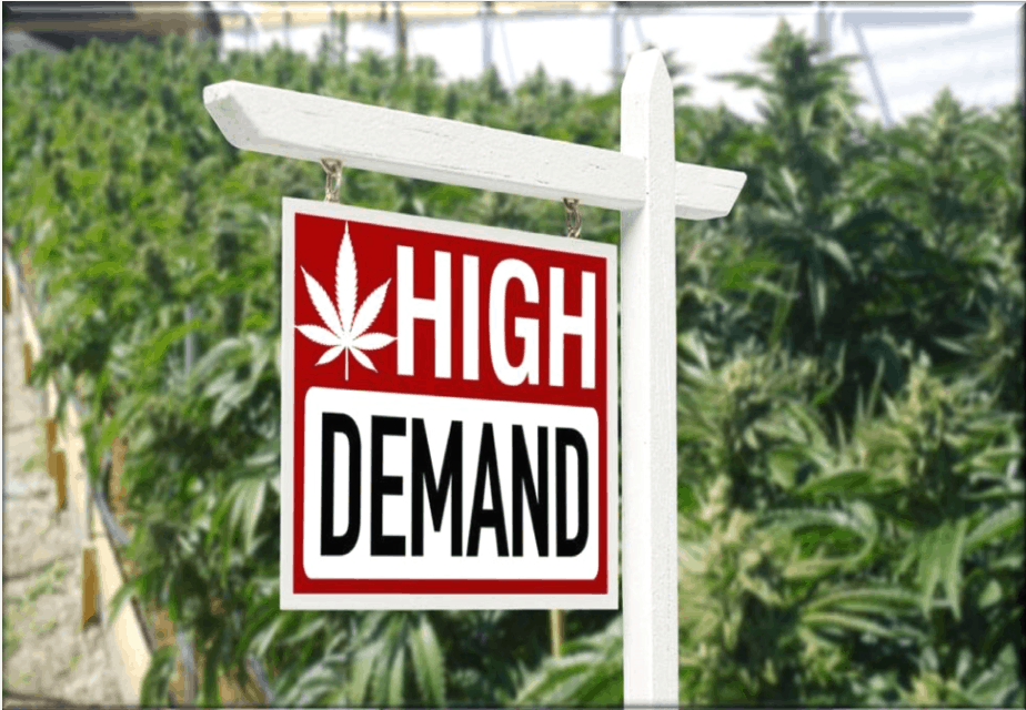 Cannabis Real Estate Market Canada