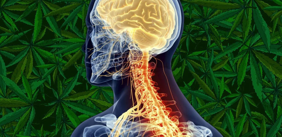 Cannabis for MS