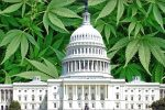 Cannabis in Congress