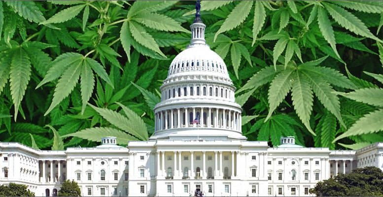 Congress and Cannabis