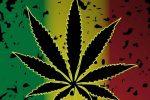 Jamaican Cannabis Strain