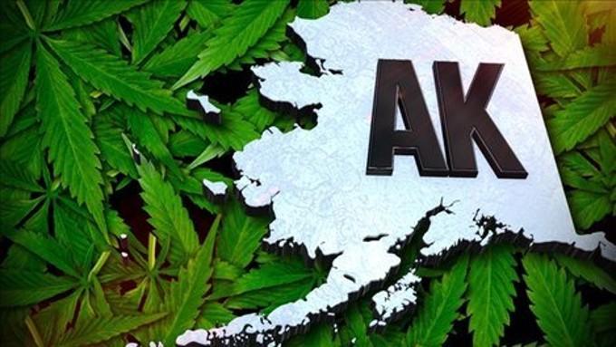 Alaska cannabis