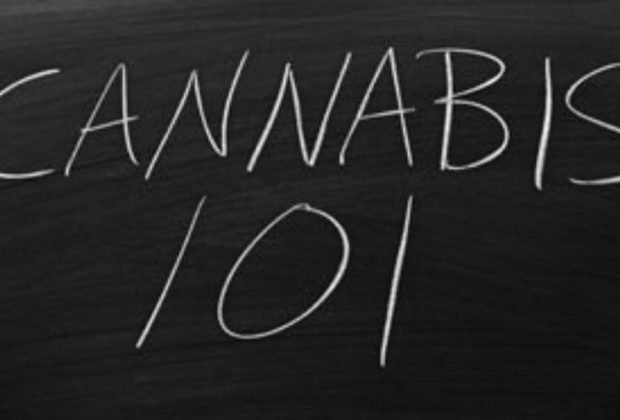 AIC Offers Cannabis Masters Degree
