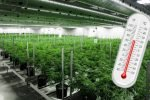 Chillers for Cannabis