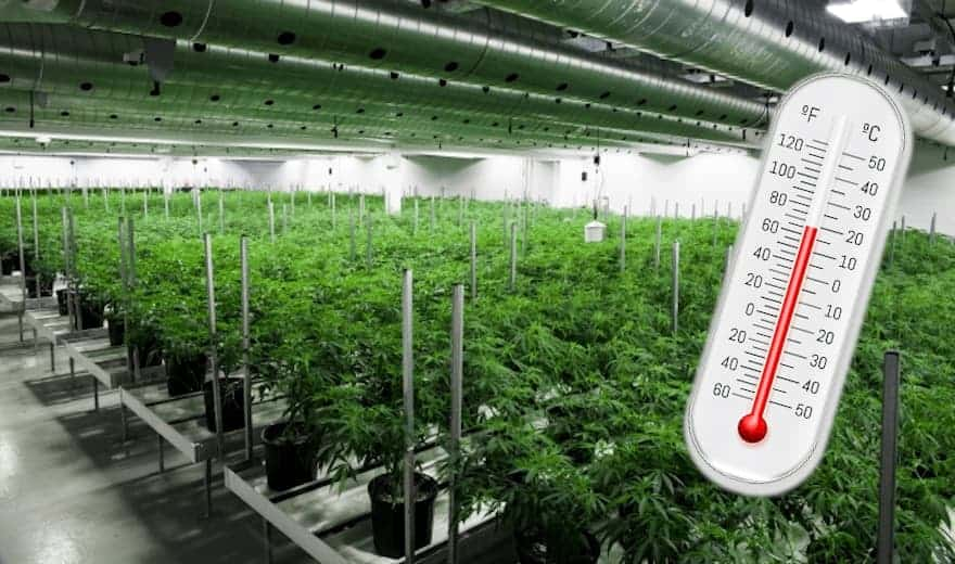 Cannabis Cultivation Chillers