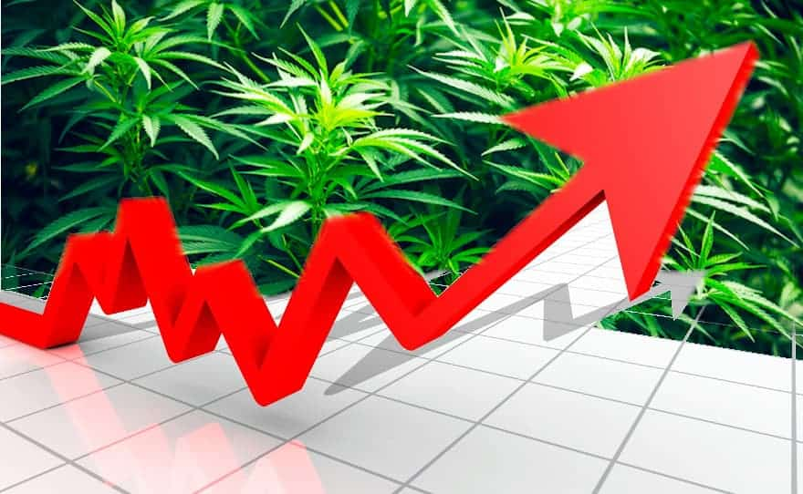 CBD Market Growth