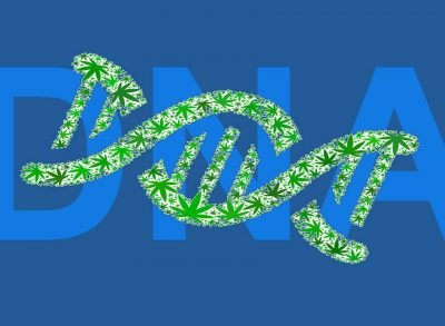 Cannabis DNA Testing