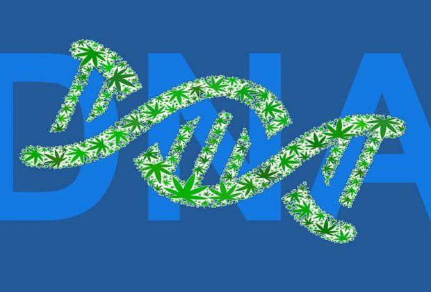 Cannabis DNA Testing