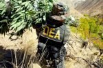 DEA Says Legal Cannabis Works