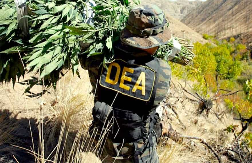 DEA Says Legal Cannabis Works