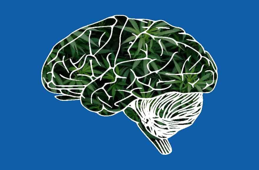 Your Brain on CBD
