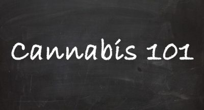Cannabis Education for Cannabis Industry
