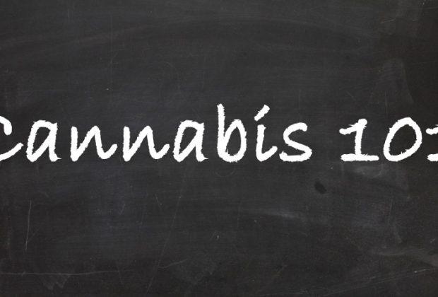 Cannabis Education for Cannabis Industry
