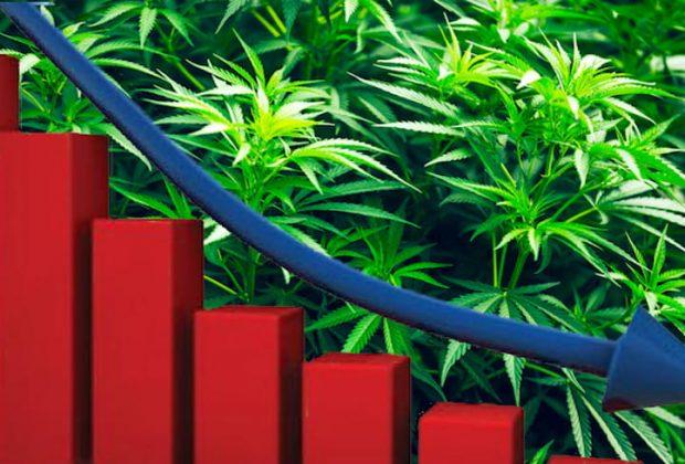 Cannabis Sales Down