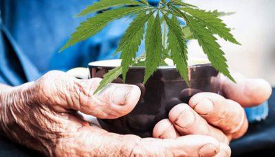 Cannabis for Osteoarthritis