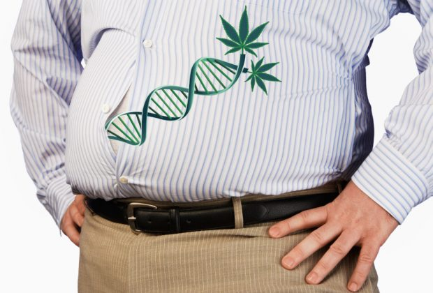 Cannabis DNA Obesity