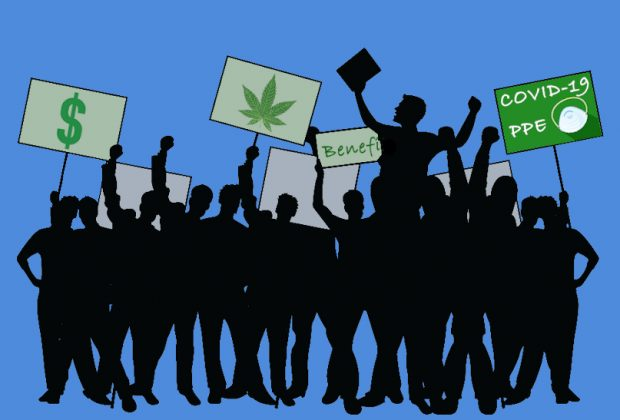 Cannabis Workers Unionize